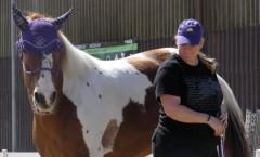 Konzentration am Working Equitation Kurs