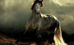 Pferde reiten dürfen ist ein Privileg