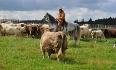 Cow Working - Domain Rurhof