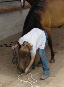 2010 06 spielerische Vorbereitungen auf das Leben als Reitpferd