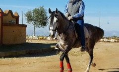 canastero_andalusien
