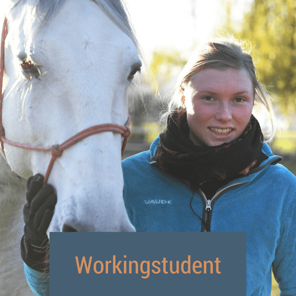 workingstudent