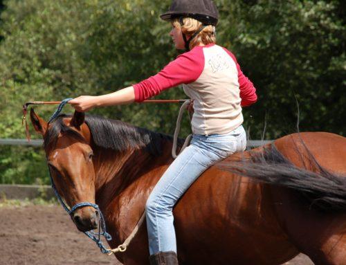 Intensivwoche für Dich und Dein Pferd