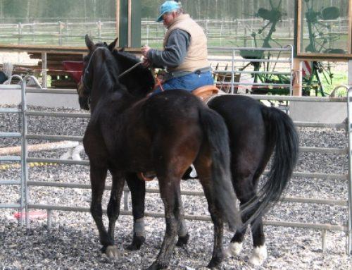 Ausbildungspferde
