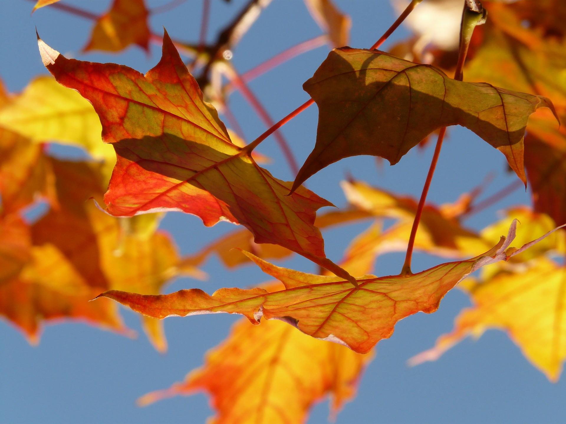 The Falling Leaf Pattern