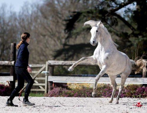 Die respektvolle Unterhaltung mit unserem Pferd