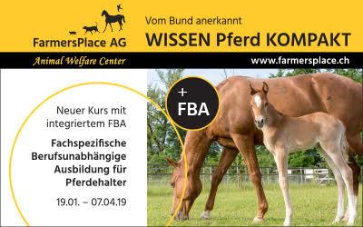 Wissen Pferd Kompakt