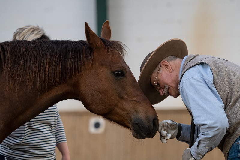 Horsemans Handshake