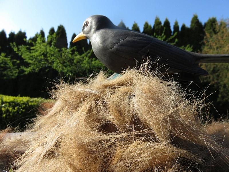 Vögel nutzen Fell als Nistmaterial