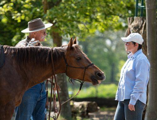 Herausforderung Mensch & Pferd