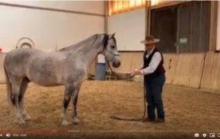 Wenn das Pferd Angst vor der Sprühflasche hat