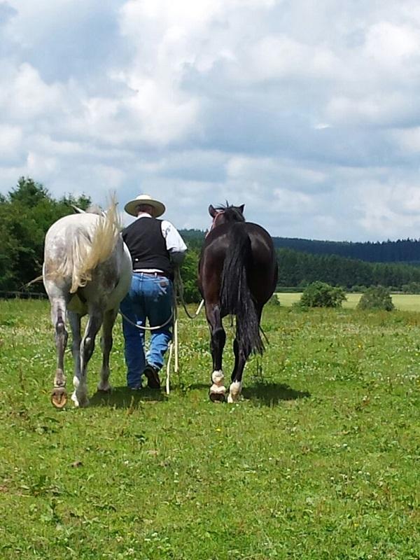Berni führt Pferde auf Weide