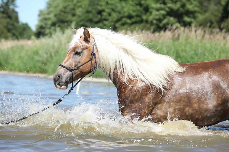 Badespass für Pferde